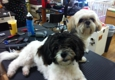Because We Care Dog & Cat Grooming - San Diego, CA