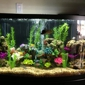 Affordable Aquarium Service - San Mateo, CA