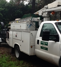 Tom Shively Tree Care - Foresthill, CA