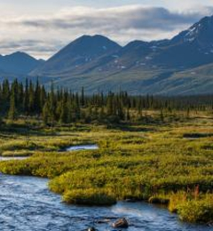 Whitsett Travel - Anchorage, AK