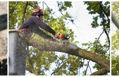 Rushton Tree Service - Lincolnton, NC