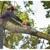 Rushton Tree Service