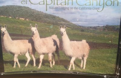 El Capitan Canyon - Goleta, CA. Short 1/2 mile hike to the lamas