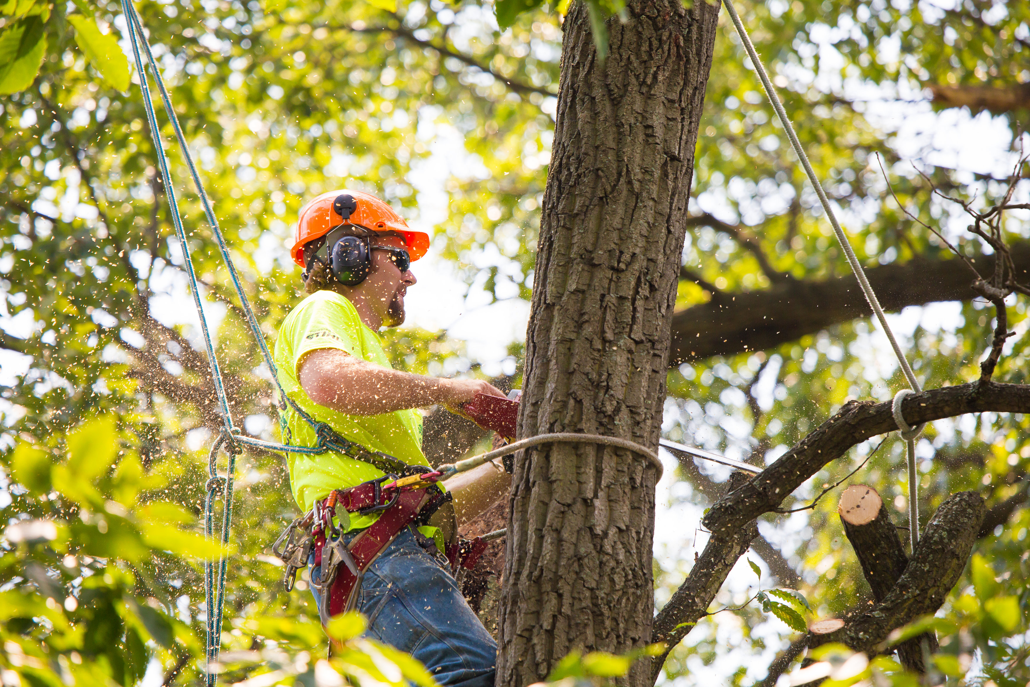 Professional Tree Service - Expert's Advice Works