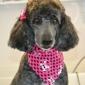 Wiggles and Wags Pet Grooming - Greensboro, NC