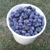 U-Pick Blueberries At Proctor Family Farm