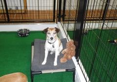 Bokhara Pet Care Centers - Williamsburg, MI