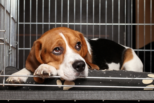Dog in a kennel, one tip for petboarding.