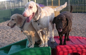 Top-Rated Kennels and Pet Boarding in the Nashville Area