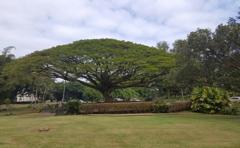 Hawaii Taxi & Tours