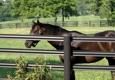 Shuck Fence Company - Shelbyville, KY