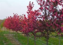 Baldwin Tree Farm - Fenton, MI