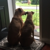 Hounds at Home