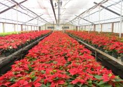 The Greenhouse - Glen Allen, VA