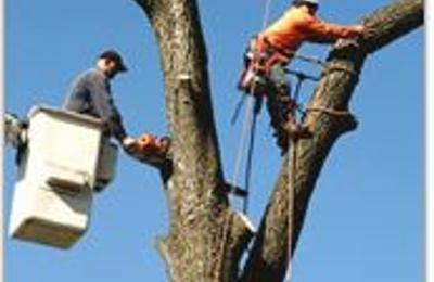 Big Mack's Tree Services - Staten Island, NY