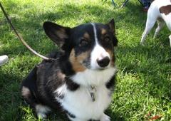 American Canine Institute - Fremont, CA