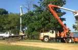 Arborist at work with equipment we use everyday.