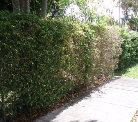 Hoffer Pest Solutions - Coral Springs, FL