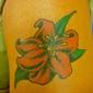 Tattoo Mike's Tattooing & Body Piercing - Haysville, KS