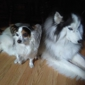 James Landing Veterinary Hospital - Jamestown, NC. Buddy & Sabrina