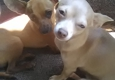 Dravosburg Veterinary Hospital - Dravosburg, PA. Clutch and breezy Love to c their vet family