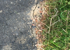Tom's Sealcoating and Paving. Cracks all over driveway