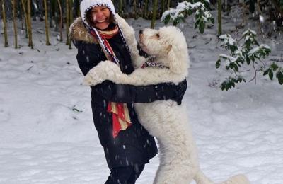 Sheer Heaven Pet Resort - Murrysville, PA. Juno celebrates seeing her mom after getting groomed at Sheer Heaven Pet Resort.