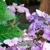 Full Features Nursery & Landscape Ctr