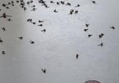 Eco Elite Pest Control 1819 Central Ave S Ste 84 Kent Wa