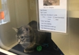 Fairfield Area Humane Society - Lancaster, OH