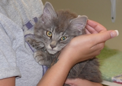 Kentucky Humane Society - Louisville, KY