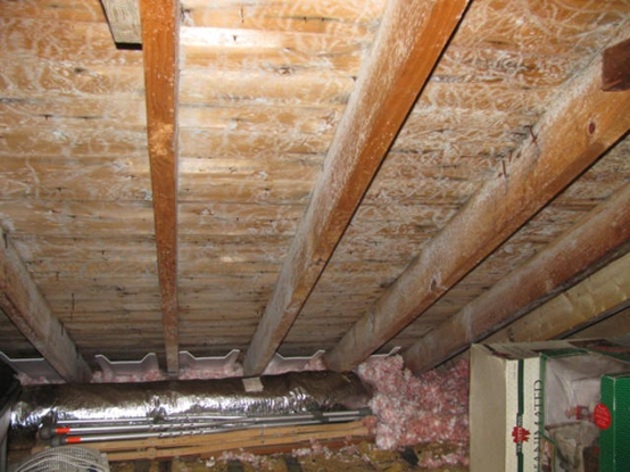 Mold Inspection & Testing Los Angeles CA - Los Angeles, CA