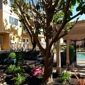 Regency Plaza Apartments - Martinez, CA