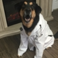 DeSoto County Animal Clinic - Southaven, MS