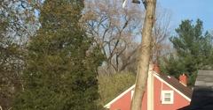 All Seasons Tree Care, Inc. - Bethlehem, PA. Almost done.
