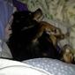 Burke County Friends for Animals Adoption - Morganton, NC. My baby
