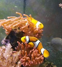 B S Fish Tanks - Pasco, WA