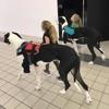 Pol Veterinary Services