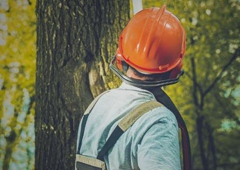 Joe's Tree Services - San Antonio, TX