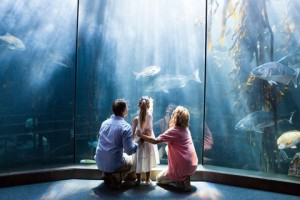 Get in a visit to the aquarium and other to-dos for the month.