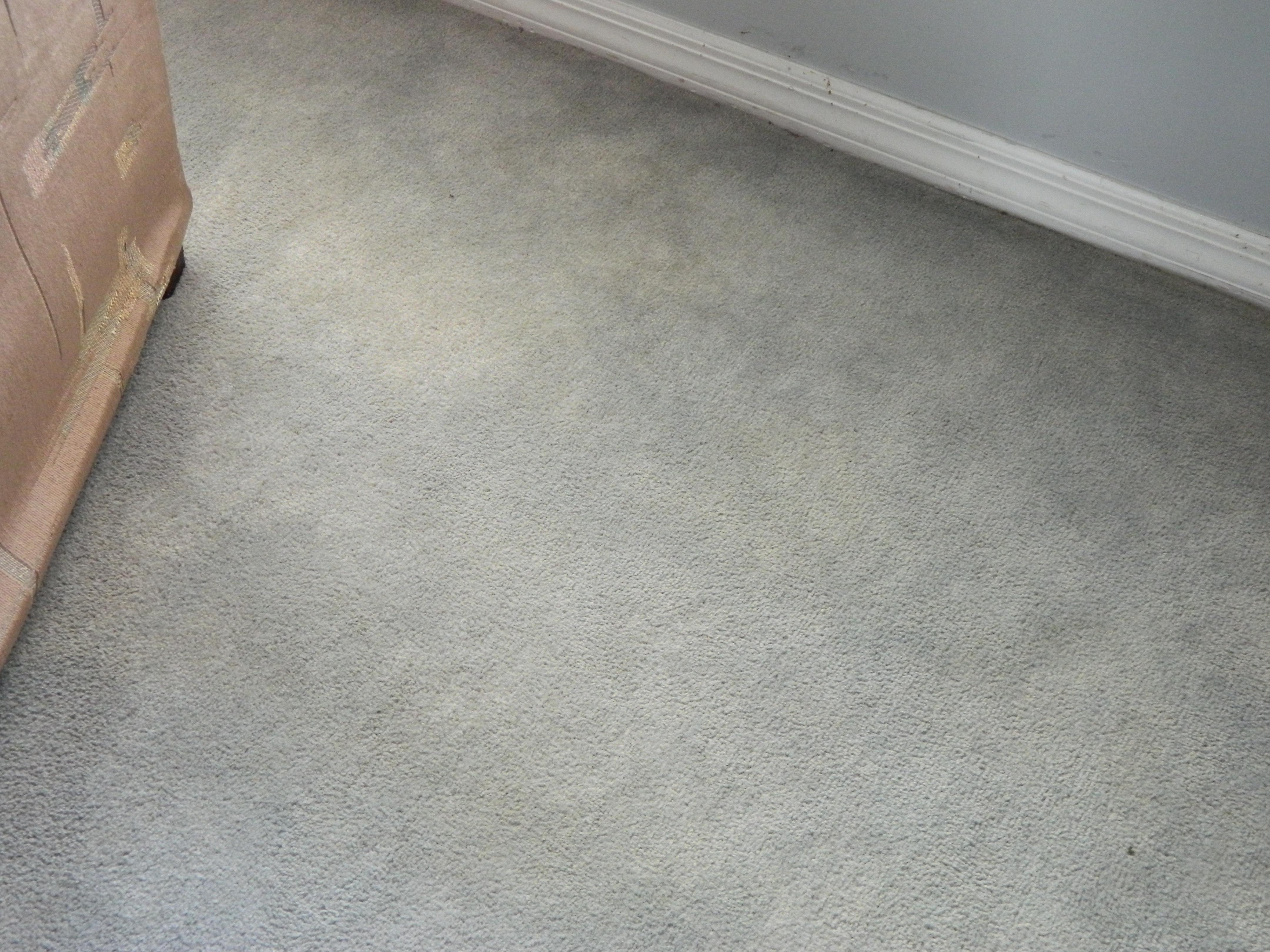 Allred S Performance Plus Carpet Tile Cleaning 4211 Ne 11th St Ocala Fl 34470 Yp Com