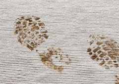 Heaven's Best Carpet Cleaning - Oregon City, OR
