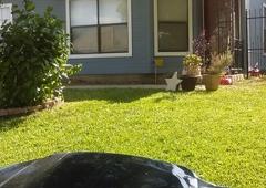 Handyman Painters - San Antonio, TX