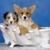 Safe Paws Dog Grooming Salon