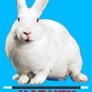 Charlie Cadabra - Cincinnati, OH. Harvey the Magical Rabbit appears!