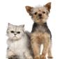 Fidosit Pet Sitter - Corpus Christi, TX
