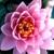 O See-Em-Bloom Landscaping