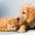 Johnstown Veterinary Associates