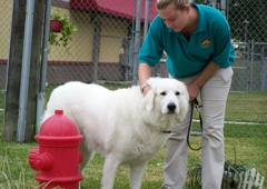 Best Friends Pet Care - Spring, TX