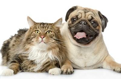 Primary Veterinary Care - Gretna, LA